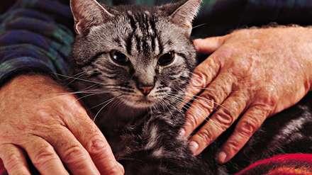 گربه های پیرمردکریه  و شاهزاده ساده دل
