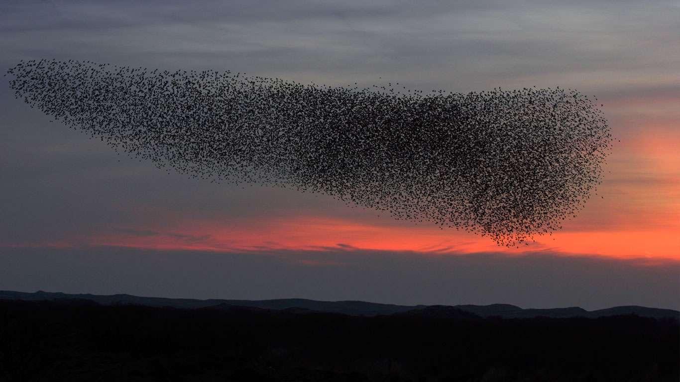 Image result for پرنده در افق