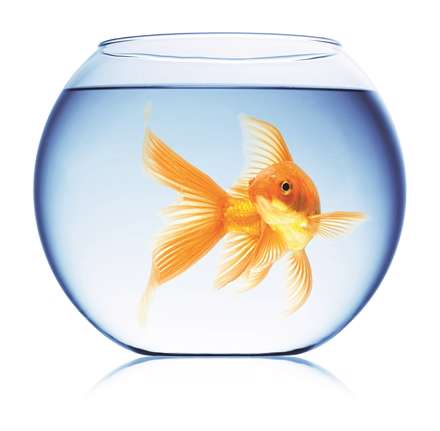ماهی،fish،قرمز،red