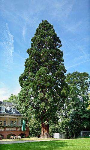 درخت تولد
