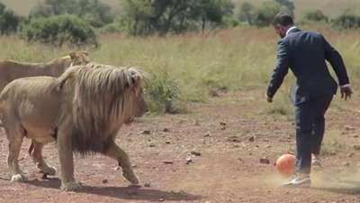 بازی فوتبال با سلطان جنگل