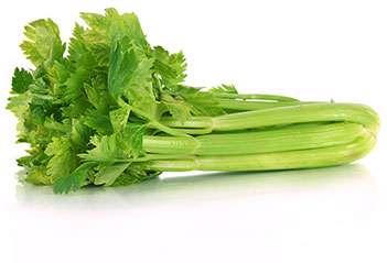 گیاه کرفس