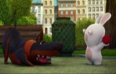 خرگوشک ها ( سگ )
