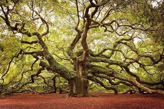 معروف ترین و خاص ترین درخت های جهان