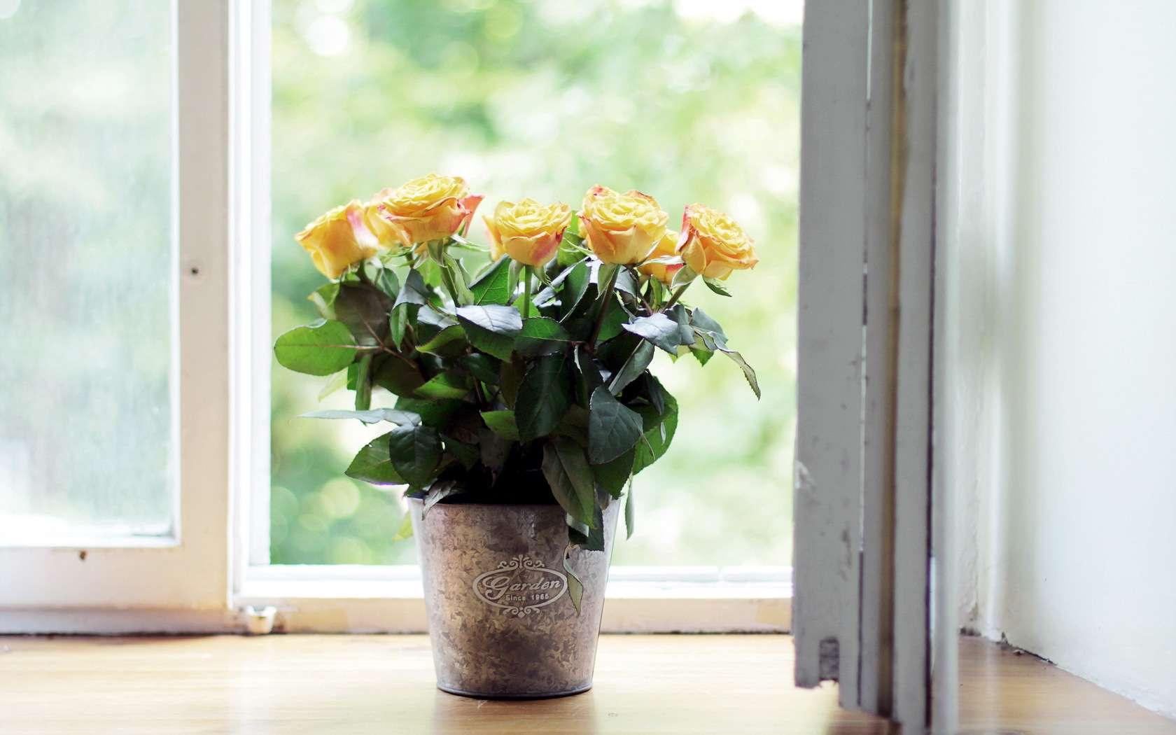 Image result for پنجره و گل