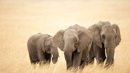 سه فیل دردشت