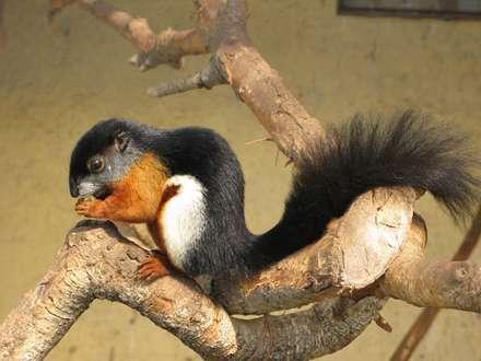 سنجابی زیبا روی شاخه