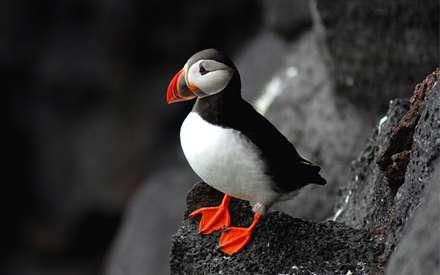 پرنده ای با نوک و پاهای نارنجی