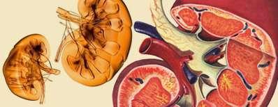 6+1 عادتی که سلامتی کلیه هایتان را به خطر می اندازد