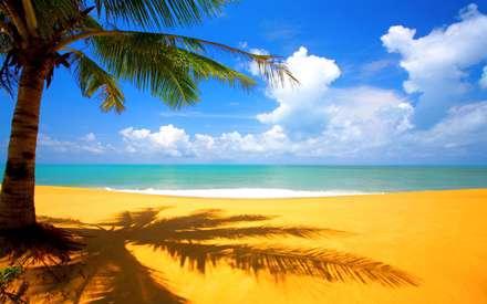 ساحل پر جنب و جوش  تابستانی