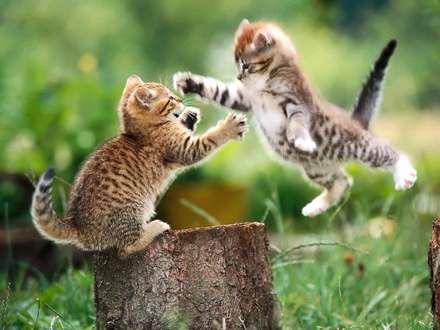 مبارزه بچه گربه ها