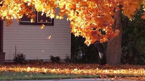 نتیجه تصویری برای پاییز متحرک انیمیشنی
