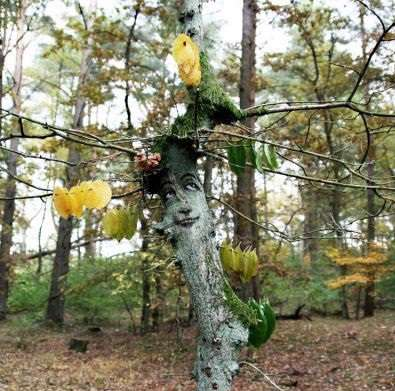 طراحی های جالب بر روی درختان زنده