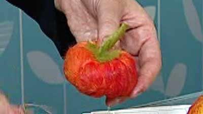 میوه نمد سوزنی (2)