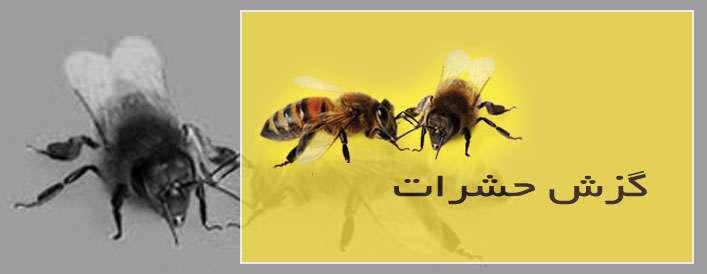 نیش حشرات خطری دارند؟