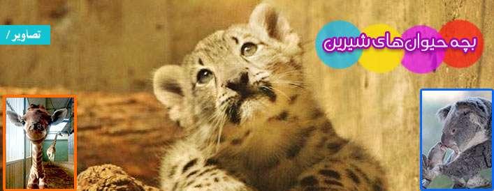 تصاویر/ بچه حیوانهای شیرین
