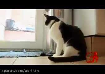 ركورد جهانی شدت غرش صدای گربه شكست