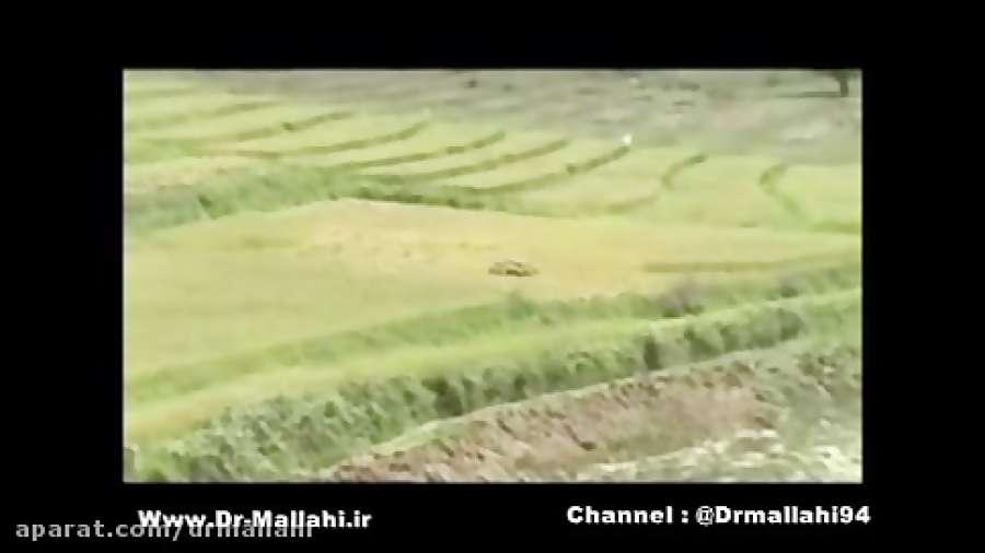 خواص برنج - دکتر ملاحی