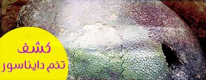 عکسهای از کشف تخم دایناسور