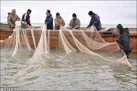 لحظه صید دشوار ماهی در رودخانه