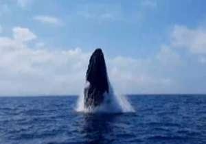 غافلگیری سرنیشنان قایق از نهنگ