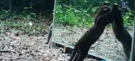 عکس العمل جالب حیوانات بعد از دیدن تصویر خود در آیینه