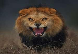 لحظه حمله مرگبار شیر نر به مربیاش در قفس