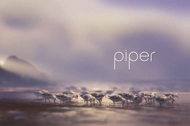 انیمیشن کوتاه Piper شانس اسکار ۲۰۱۷
