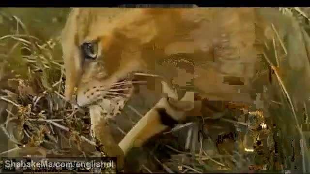 درگیری گربه و مار