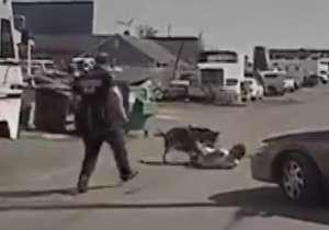دستگیری یک مجرم توسط سگ پلیس