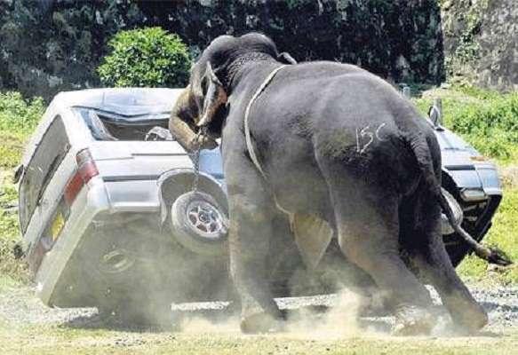 یک فیل عصبانی و قدرتمند اینطوری است!