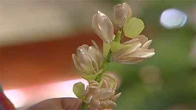 گل مریم و شکوفه کریستالی