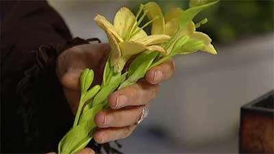 گل آلستر (2)