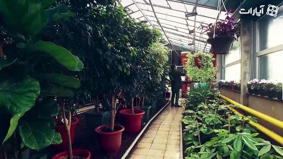 سلفی با تهران / گل های زعیم (1)