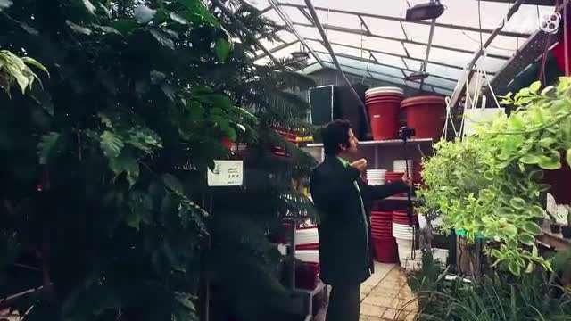 سلفی با تهران / گل های زعیم (2)