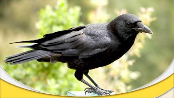 هوش پرنده