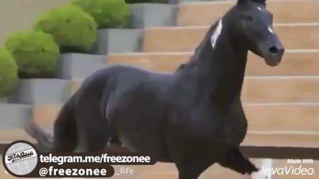 زیباترین اسب های جهان در یک کلیپ