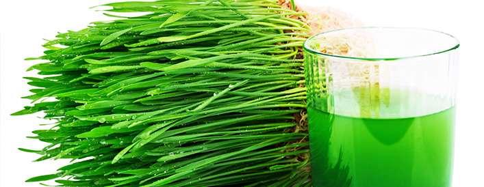 17 خاصیت آب سبزه گندم