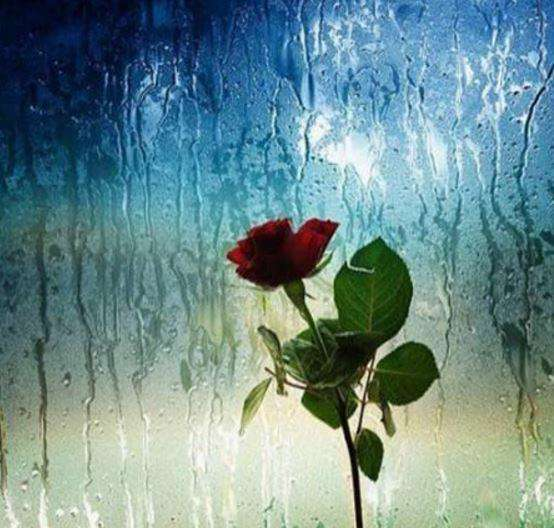 نماهنگ «مثل باران» با موضوع 22 بهمن 95