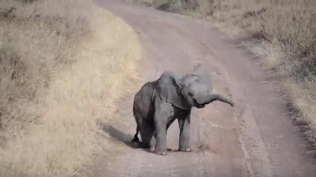 حرکات بامزه فیل کوچولو!