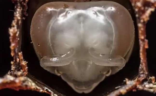 شکلگیری زنبور