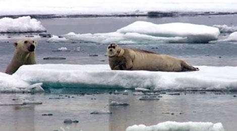 وقتی خرس قطبی فوک را سوپرایز می کند!