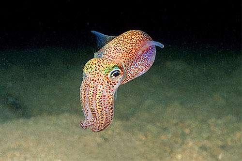 شیوه جالب صید ماهی مرکب از دل ماسه ها