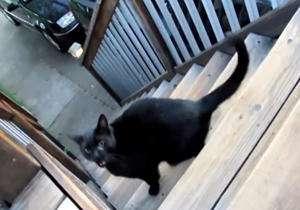 گیر کردن یک مار در بینی گربه!