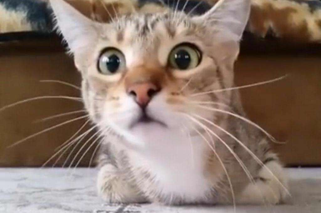 وقتی یک گربه فیلم ترسناک می بیند!