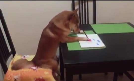 سگی که استعداد عجیب و غریبی دارد