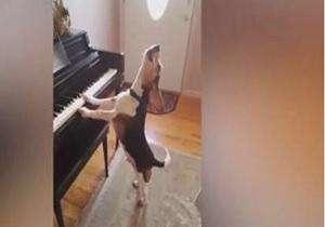 تا حالا سگی دیدهاید که پیانو بنوازد و آواز بخواند؟