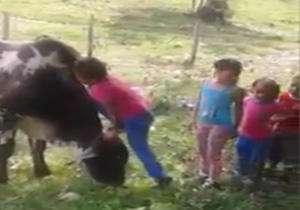 سواری گرفتن بامزه کودکان از یک گاو