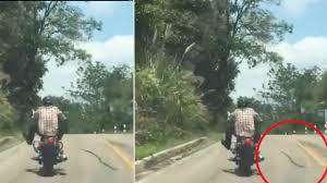 حملهی عجیب مار به موتورسوار در حال حرکت