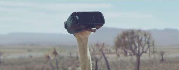 وقتی شترمرغ با عینک واقعیت مجازی پرواز می کند